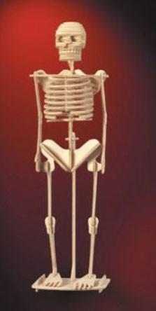 Сборная модель из дерева: Скелет человека - МДИ