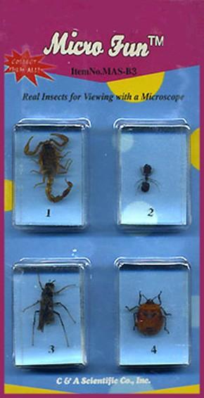 Микропрепараты для стереомикроскопа Набор №14: Насекомые